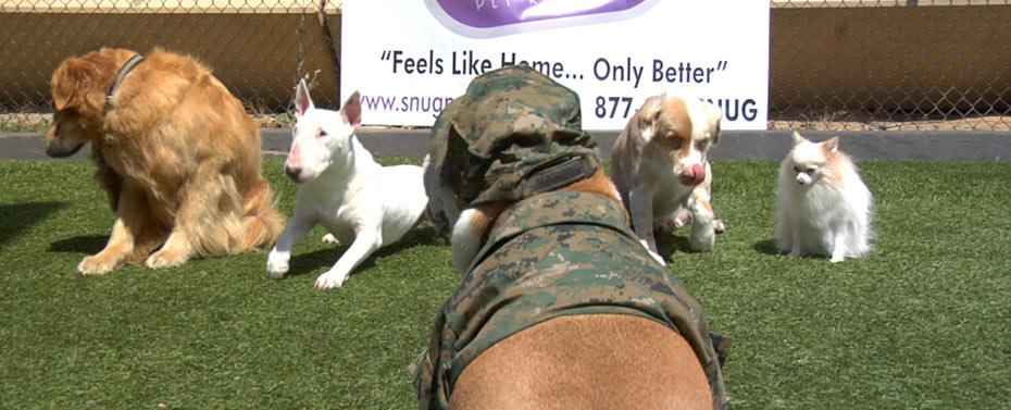 Doggie Boot Camp