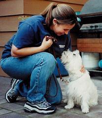 dog training facility